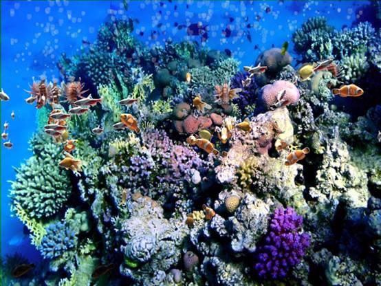 高清海洋地面互动系统3